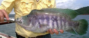 Fishing in the Arenal region is one of the many activites available.