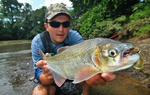Fishing for Machaca in the fresh waters of Costa Rica.