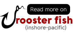 All you ever wanted to know about rooster fish and sportfishing roosters in Costa Rica.