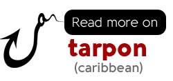 Read what it takes to catch tarpon in costa rica, off the caribbean coast of the country is some of the best tarpon fishing in the world.